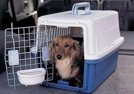 宠物航空托运